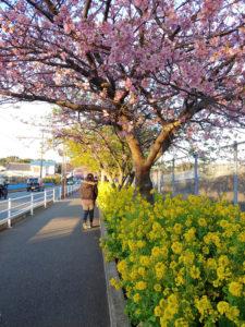 桜の時期に売れるアフィリエイト案件